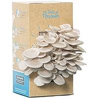 Kit Prêt à Pousser pour cultiver des champignons - Pleurotes gris - Dans votre cuisine en 10 jours