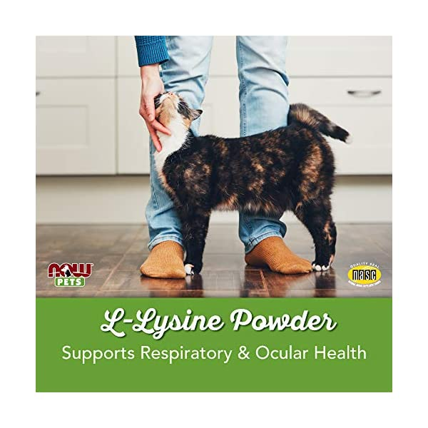 NOW Pet Health, L-Lysine Supplement, Powder, Formulated for Cats, NASC Certified, 8-Ounce 3