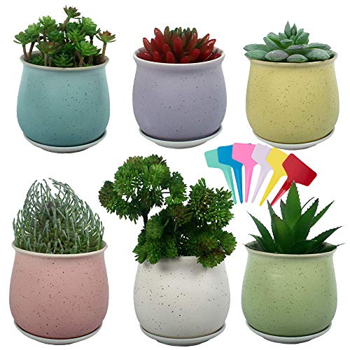 - Casolly Ceramic Succulent Plant Pot Flower Pot Container Planter with Tray- 6 Pack