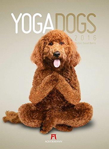 Yoga Dogs 2016