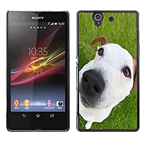 Vortex Accessory Carcasa Protectora Para Sony Xperia Z L36H C6602 C6603 C6606 C6616 - Jack Russell Mutt Mongrel White Puppy -