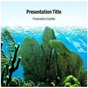 Amazon com: Marine Plants Powerpoint Templates - Marine