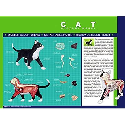 4D Master Vision Cat Skeleton & Anatomy Model Kit: Industrial & Scientific