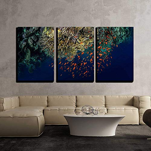 (wall26 - 3 Piece Canvas Wall Art - Top View of The Coral Reefs with Tiny Fish in The Ras Muhammad National Park. Egypt - Modern Home Decor Stretched and Framed Ready to Hang - 16