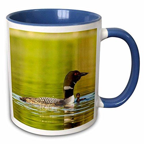 3dRose 144808_6 Common loon birds, Beaver Lake, Montana, USA Mug, 11 oz, Blue