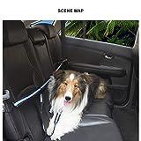 CAPTIANKN Dog Seat Belt, 2-Piece Pet Harness