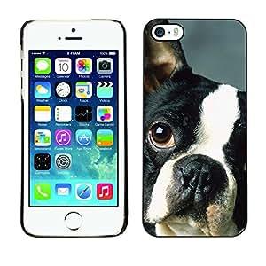 Be Good Phone Accessory // Dura Cáscara cubierta Protectora Caso Carcasa Funda de Protección para Apple Iphone 5 / 5S // French Bulldog Boston Bull Terrier Dog