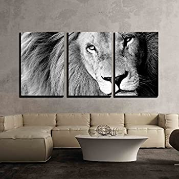 Wall26 3 piece canvas wall art close up of male lion bw