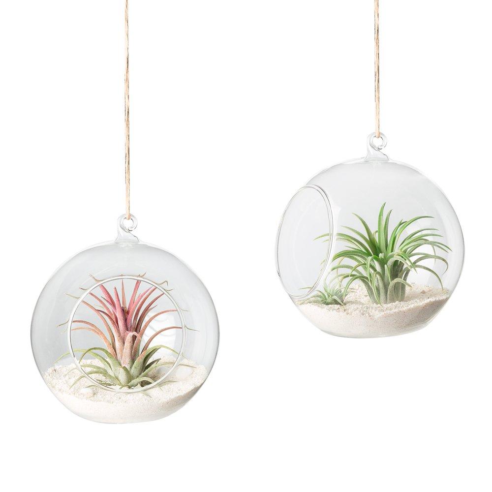 Mkono Glass Hanging Terrarium Air Plant Globe Candle Holder Home Decor Set of 2, 4 3/4 Inches by Mkono