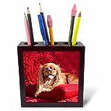 3dRose Danita Delimont - Dogs - Cavalier lying on red pillow, MR - 5 inch tile pen holder (ph_258255_1)