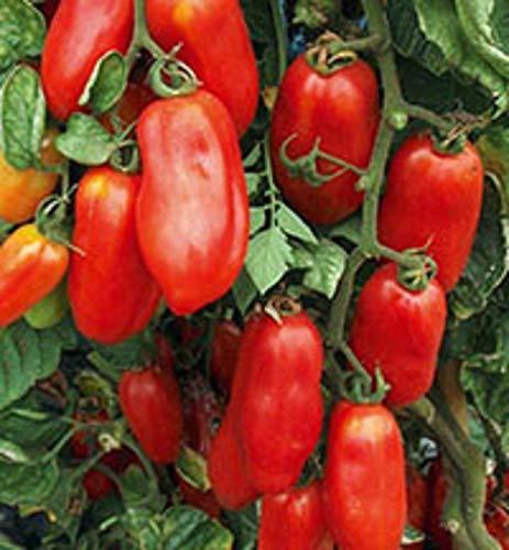 (San Marzano Redorta Tomato Seeds - heirloom variety from Tuscany, Italy. !!!(25 - Seeds) )