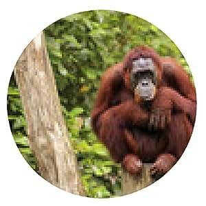 alfombrilla de ratón orangután - ronda - 20cm