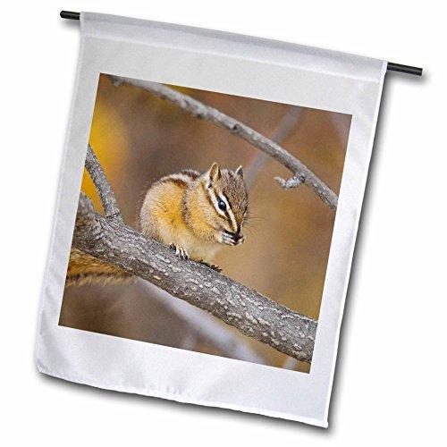 3dRose fl_84534_1 Least Chipmunk Wildlife, Grand Teton Np, Wyoming-NA02 RNU0655-Rolf Nussbaum Garden Flag, 12 by 18-Inch
