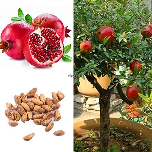 (Portal Cool 20Pcs Four Seasons Plant Potted Garden Ornamental Bonsai Pomegranate Ehe8 01)