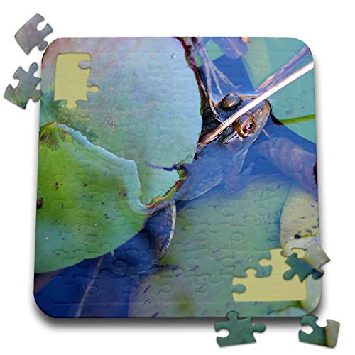 3dRose Stamp City - animals - Photograph of frog hiding under lily pad in a pond. - 10x10 Inch Puzzle (pzl_289772_2) ()