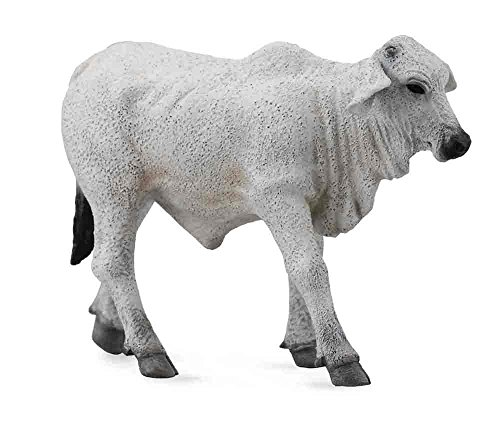 collecta-brahman-calf