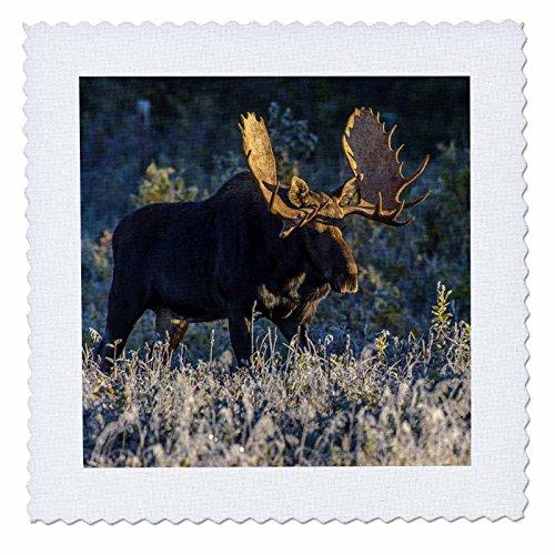 Riding A Moose - 5