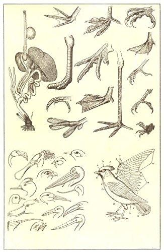 amazon com parts of a bird digestive organs feet head bill