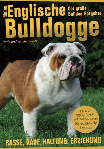 meine-englische-bulldogge-der-bully-ratgeber