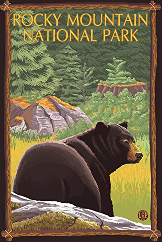 Rocky Mountain National Park, Colorado - Bear in Forest (36x54 Giclee Gallery Print, Wall Decor Travel Poster)