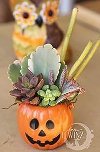 Halloween Set Pumpkin Planter 5 Assorted Cuttings Gift Pink Kalanchoe DIY KIT