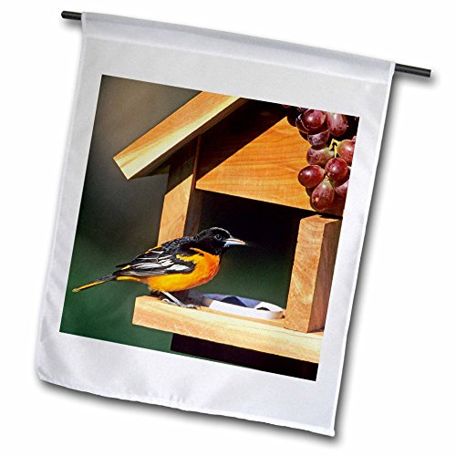 3dRose Danita Delimont - Oriole - Baltimore Oriole male on jelly and grape feeder, Illinois - 12 x 18 inch Garden Flag ()
