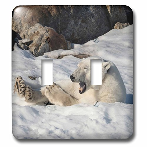 3dRose Danita Delimont - Bears - Arctic Ocean, Norway, Svalbard. Resting polar bear. - Light Switch Covers - double toggle switch ()