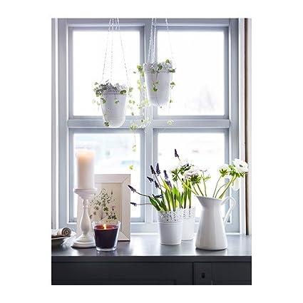 IKEA SKURAR - Planta de tiesto, de color blanquecino - 12 cm: Amazon.es: Jardín