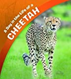 A Day in the Life of a Cheetah (A+ Books: A Day in the Life)