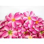 100-Two-Tone-Pink-Hawaiian-Plumeria-Frangipani-Silk-Flower-Heads-3-Artificial-Flowers-Head-Fabric-Floral-Supplies-Wholesale-Lot-for-Wedding-Flowers-Accessories-Make-Bridal-Hair-Clips-Headbands-Dress