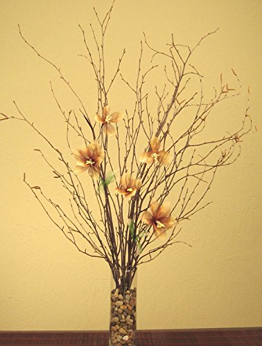 Amazon Green Floral Crafts Natural Birch Branches Star