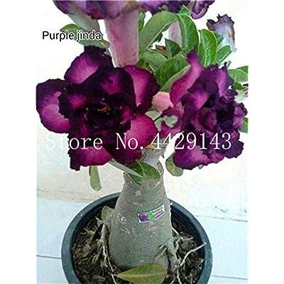 100% True Desert Rose Bonsai Ornamental Plants Balcony Bonsai Potted Flowers Drawf Adenium Obesum Bonsai -1 Particles/lot - (Color: 21): Garden & Outdoor