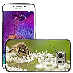 Super Stella Slim PC Hard Case Cover Skin Armor Shell Protection // M00104473 Bug Bee Macro Insects Close Up // Samsung Galaxy S6 (Not Fits S6 EDGE)