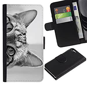 LASTONE PHONE CASE / Lujo Billetera de Cuero Caso del tirón Titular de la tarjeta Flip Carcasa Funda para Apple Iphone 5 / 5S / cat eyes black white kitten cute pet