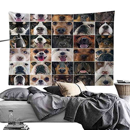 Homrkey Tapestry Dog Lover Decor Collection Dogs Studio Shot Chihuahua Chow Chow Cocker Spaniel Poodle Purebred Sheepdog Tapestry for Room W60 x L40 Brown Black Beige