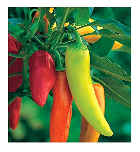 David's Garden Seeds Pepper Hot Hungarian Hot Wax SV5821 (Red) 50 Non-GMO, Heirloom Seeds (Heirloom Banana Pepper Seeds)