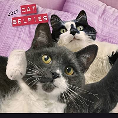 Cat Selfies 2017