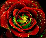 Heirloom Big Blooming Red Green Rose Bush Flower Seeds, Professional Pack, 50 Seeds / Pack, Strong Fragrant Climbing Flowers