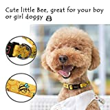QQPETS Dog Collar Personalized Soft Comfortable