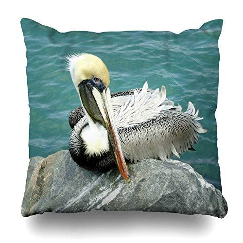 Suesoso Decorative Pillows Case 18 X 18 Inch Sitting Pelican Throw Pillowcover Cushion Decorative Home Decor Garden Sofa Bed Car from Suesoso