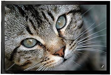 1art1® Gatos - Pequeño Gato Tigrado Felpudo Alfombra (60 x 40cm): Amazon.es: Hogar