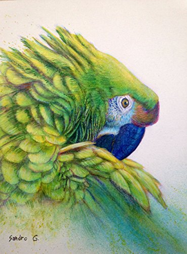 Parrot Portrait  original wildlife acrylic bird home wall art