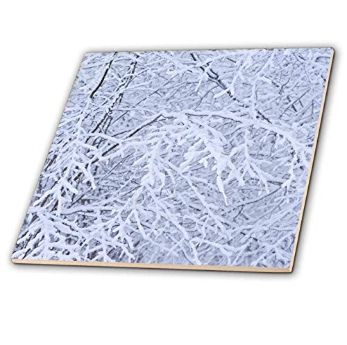 3dRose Alexis Photography - Seasons Winter - Mix of Hazel nut Tree Branches Covered with Fresh Snow. Winter Forest - 6 Inch Glass Tile -