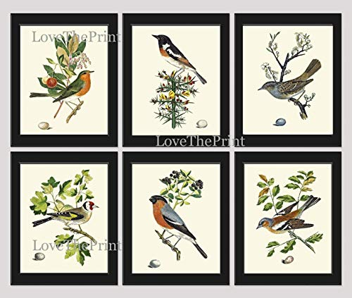 (Bird Print Set of 6 Prints Antique Art Beautiful Colored Colorful Natural Science Summer Garden Nature Fruit Berries Tree Branch Leaf Home Room Wall Decor Unframed CJ)