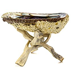 """5""""+ Hand Selected Premium Abalone Shell with 6"""" Wooden Cobra Stand. Alternative Imagination Brand"""