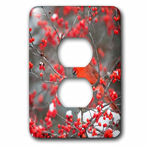 3dRose Danita Delimont - Birds - Northern Cardinal in Winterberry bush, winter, Marion County, Illinois - Light Switch Covers - 2 plug outlet cover (lsp_259307_6)