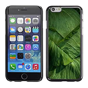 Cubierta de la caja de protección la piel dura para el Apple iPhone 6PLUS (5.5) - cabbage gardening yard eco vegetable
