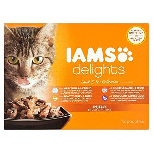iams wet kitten food - 9