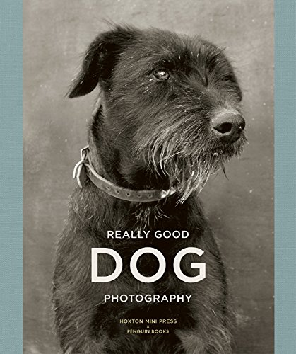 Really Good Dog Photography