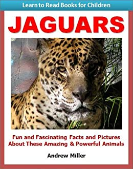 Jaguars   Fun And Fascinating Facts And Pictures About These Amazing U0026  Powerful Animals (Learn
